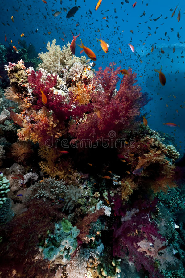 Free Coral And Fish Stock Photos - 11433473