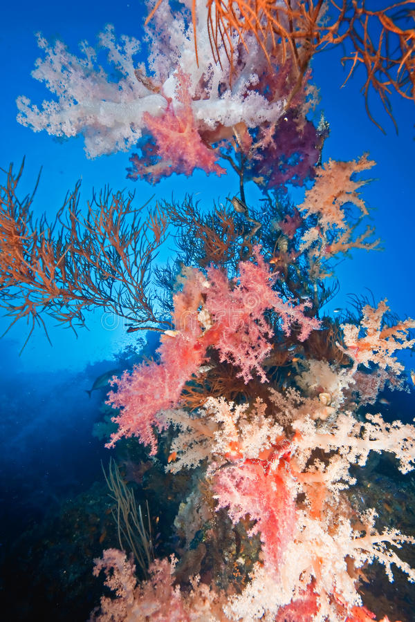 Free Coral And Fish Royalty Free Stock Image - 9576096