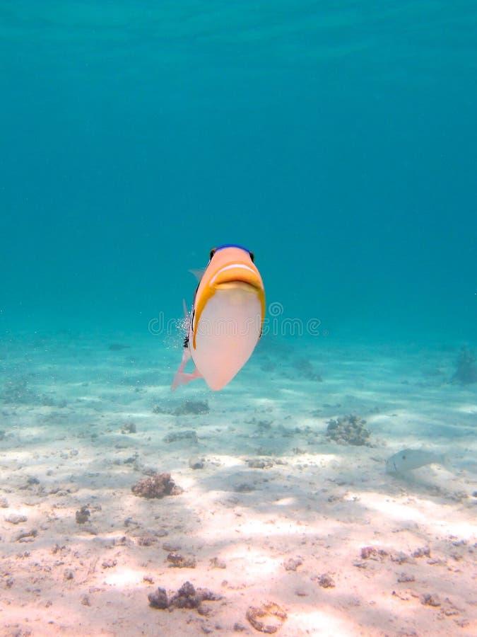 Download Coral Bay, Australia Occidentale Fotografia Stock - Immagine di coral, duna: 55364274