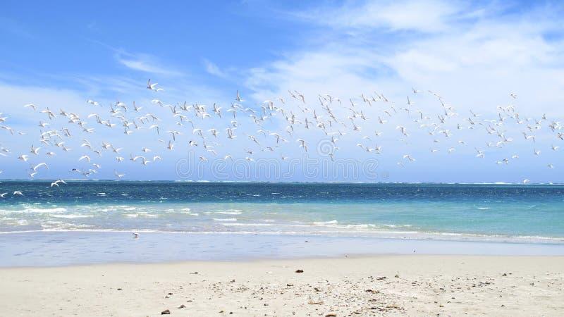 Coral Bay, Westelijk Australië stock afbeeldingen