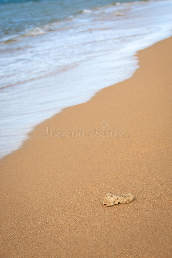 Download Coral on the Beach stock image. Image of nature, blue - 23286193
