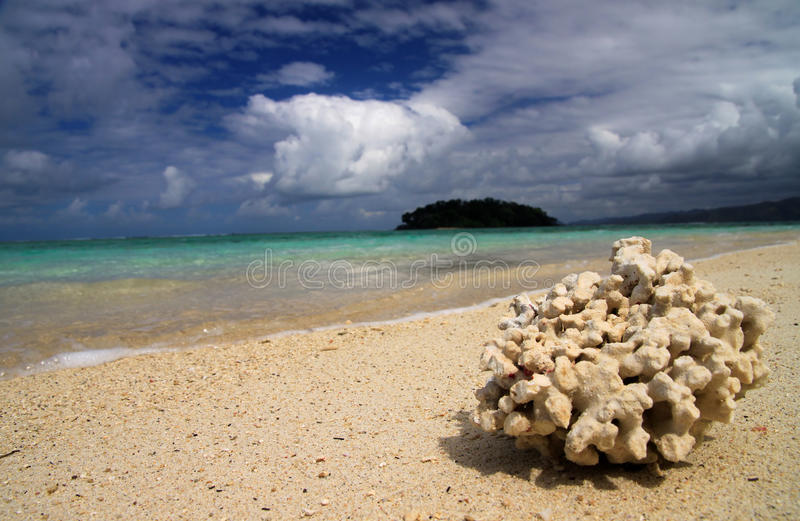 Download Coral on the beach stock image. Image of island, african - 23582901