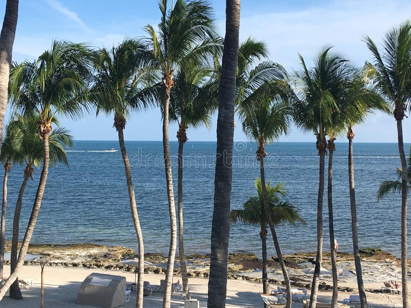 Atlantic Ocean side of Key West Florida Beach lined with Palm trees stock image