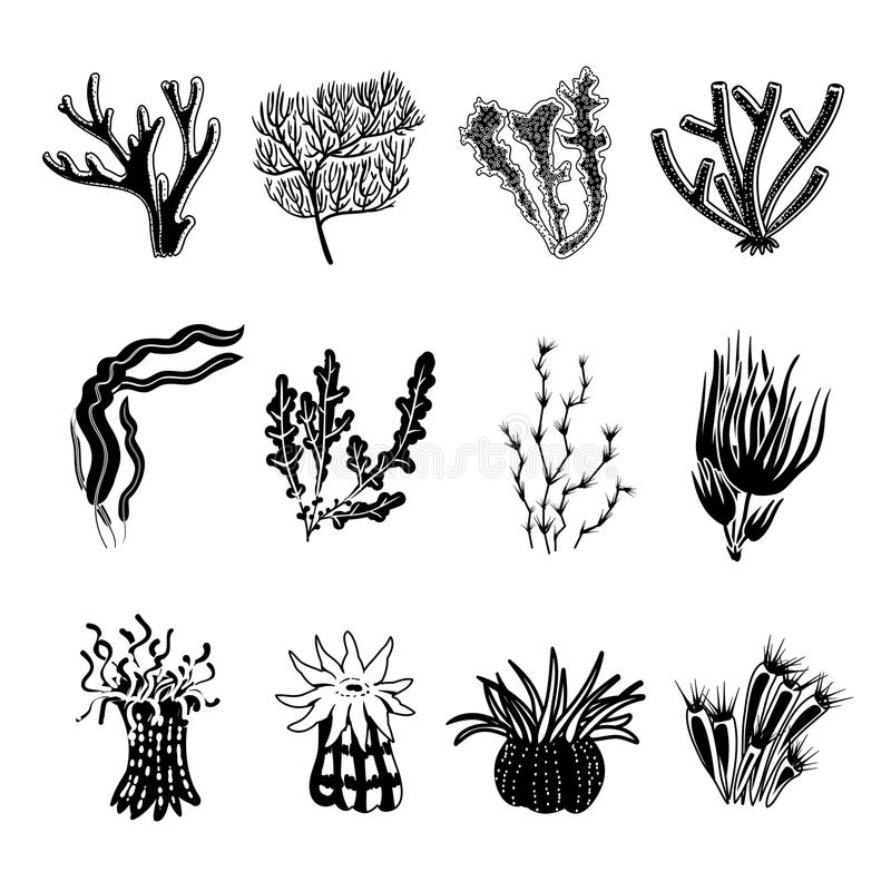 Coral Black Set. Tropical ocean coral black decorative icons set isolated vector illustration vector illustration
