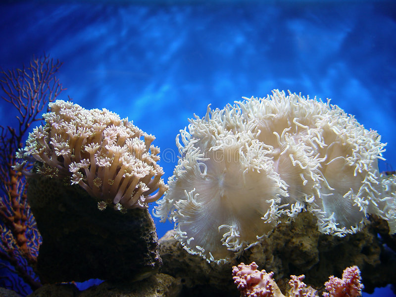 Coral bonito imagens de stock royalty free