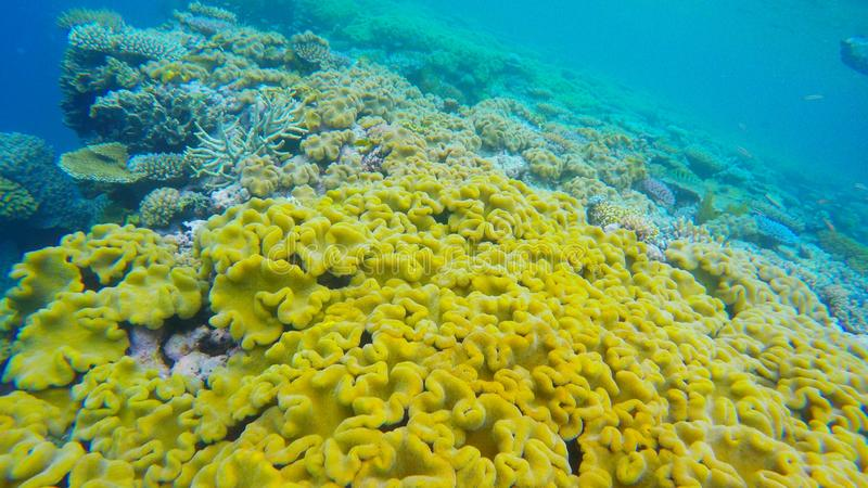 Coral close up in agincourt reefs australia. Close up of coral reefs off the coast of port douglas in the great barrier reef in stock images