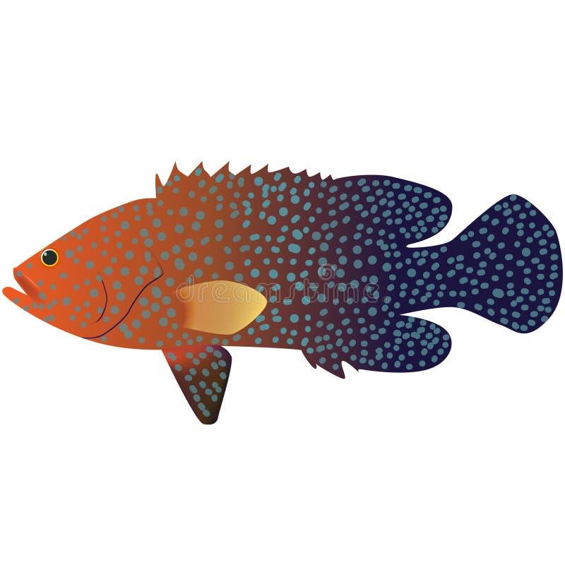 Coral Cod. Fish marine life illustrator stock illustration