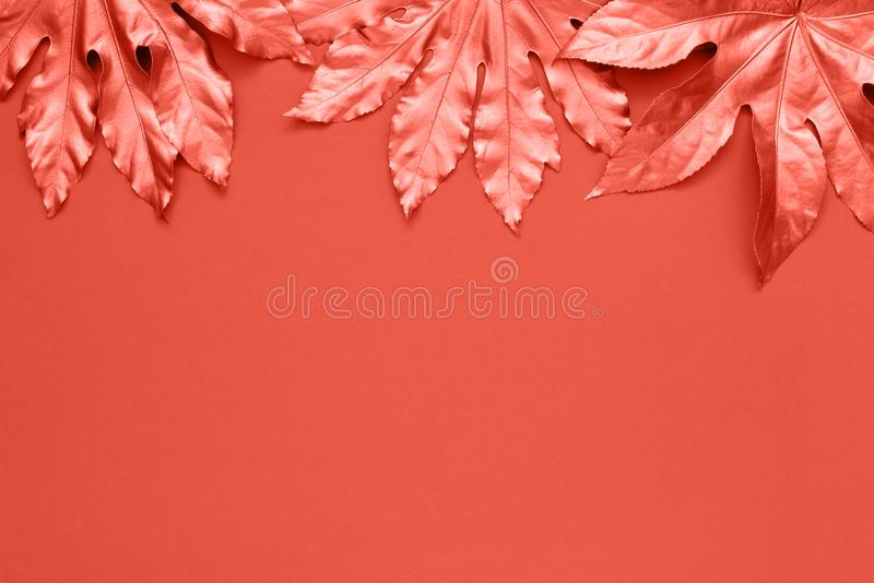 Coral colored tropical leaves on coral color backdrop. Minimal summer exotic concept with copy space. Copy space, top view. Toned royalty free stock photo