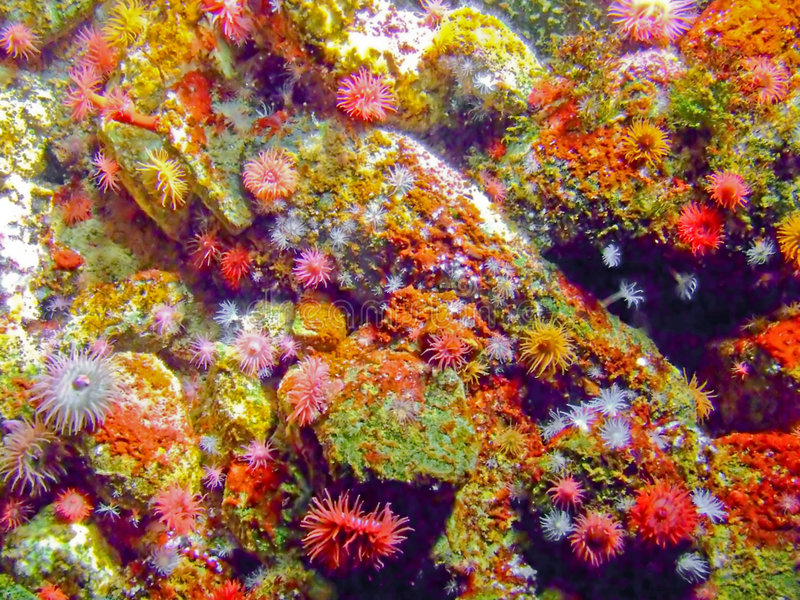 Coral colorido fotografía de archivo