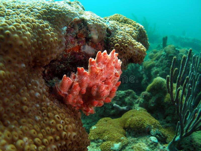 Coral colorido fotografia de stock royalty free