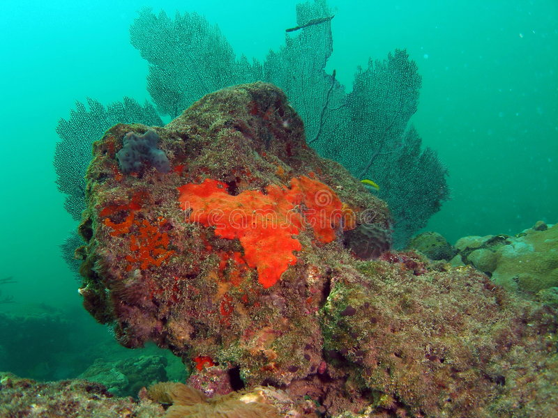 Coral colorido com coral do ventilador imagens de stock royalty free