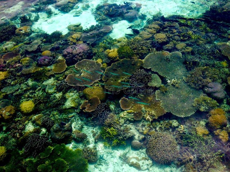 Coral colorido, peixes e vida marinha em águas claros da ilha tropical imagem de stock