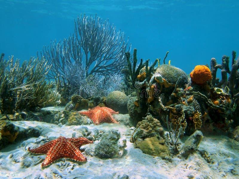Coral con las estrellas de mar debajo del agua imágenes de archivo libres de regalías