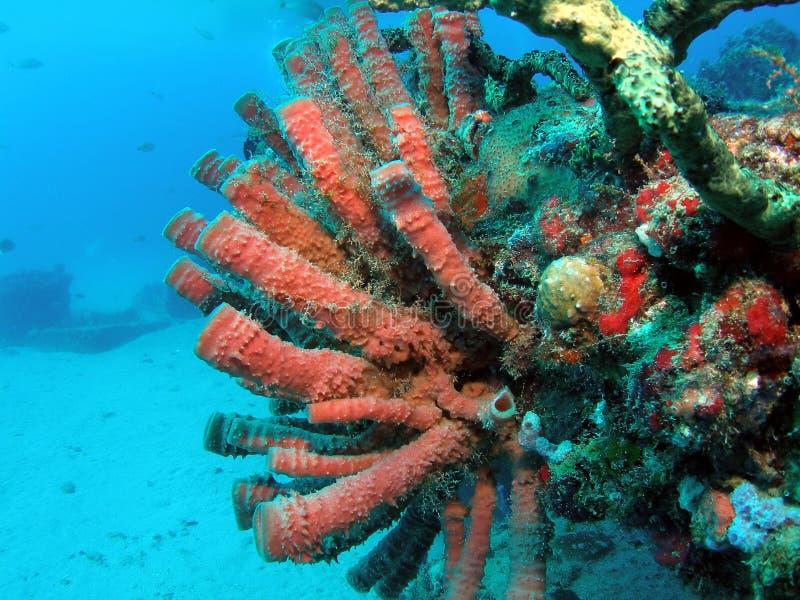 Coral da câmara de ar no jardim zoológico do Aqua imagens de stock royalty free
