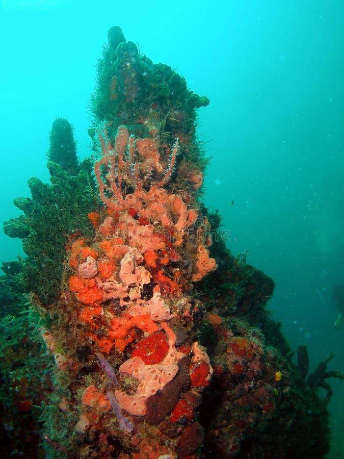 Coral da destruição fotos de stock royalty free