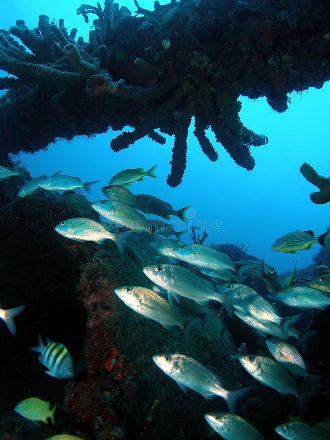 Coral da destruição fotografia de stock