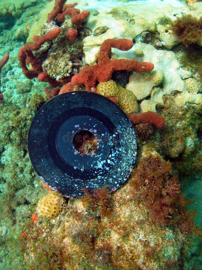 Coral da música foto de stock royalty free