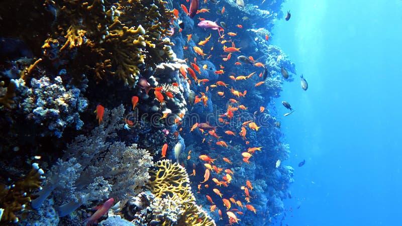 Coral de la pared imagen de archivo libre de regalías