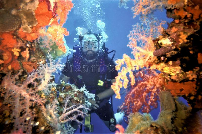 Coral de Peers Through Soft do mergulhador em Fujikawa Maru foto de stock