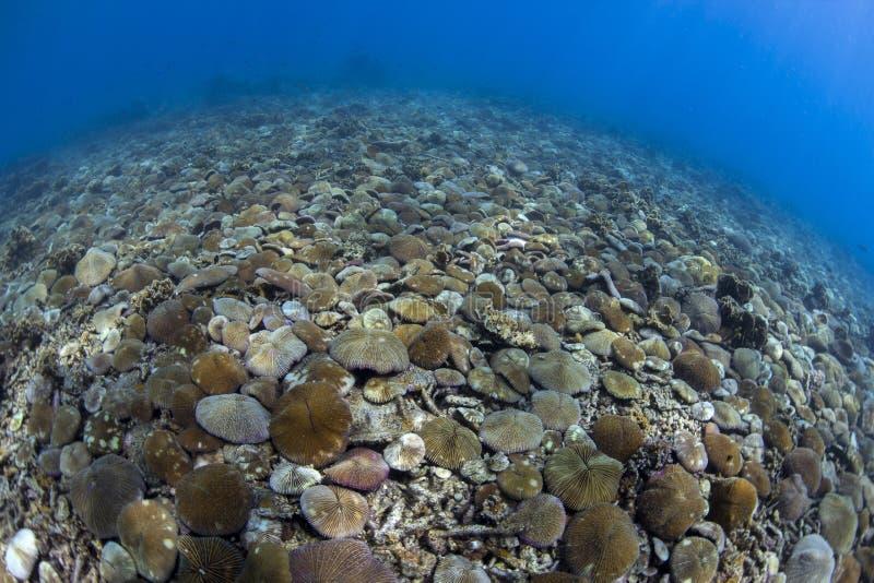 Coral de seta fotografía de archivo libre de regalías