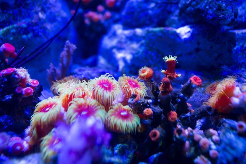 Coral del acuario fotografía de archivo