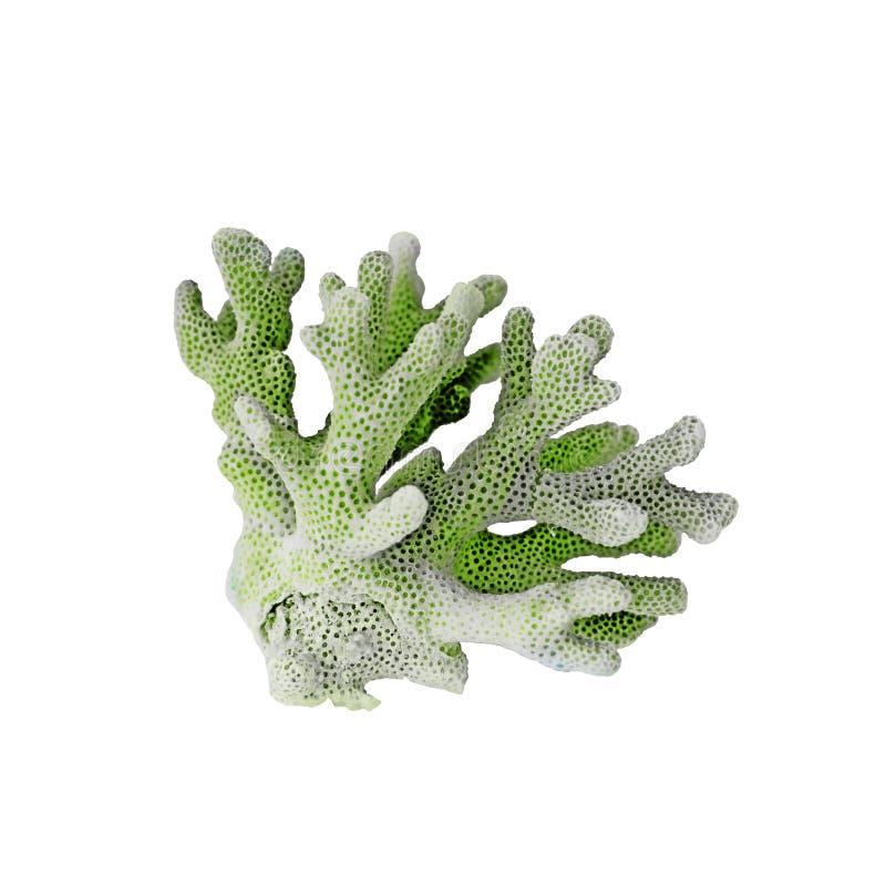 Coral del color aislado fotografía de archivo