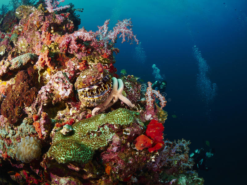 Coral del filón y pescados del filón con seastar imagen de archivo libre de regalías