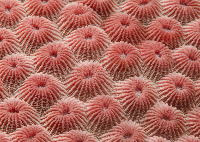 Coral Detail royalty free stock images