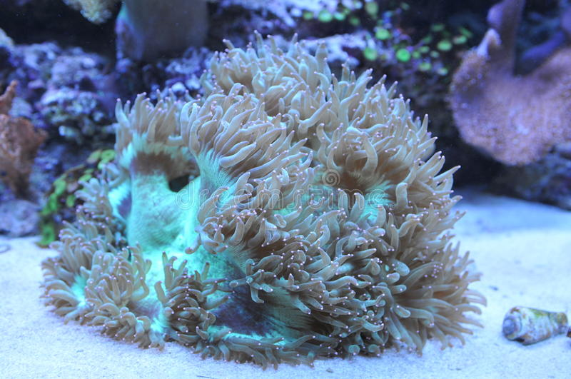Coral do oceano imagens de stock royalty free