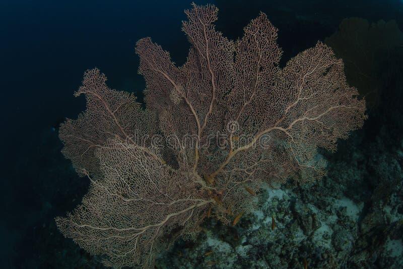 Coral duro vermelho em Maldivas fotografia de stock