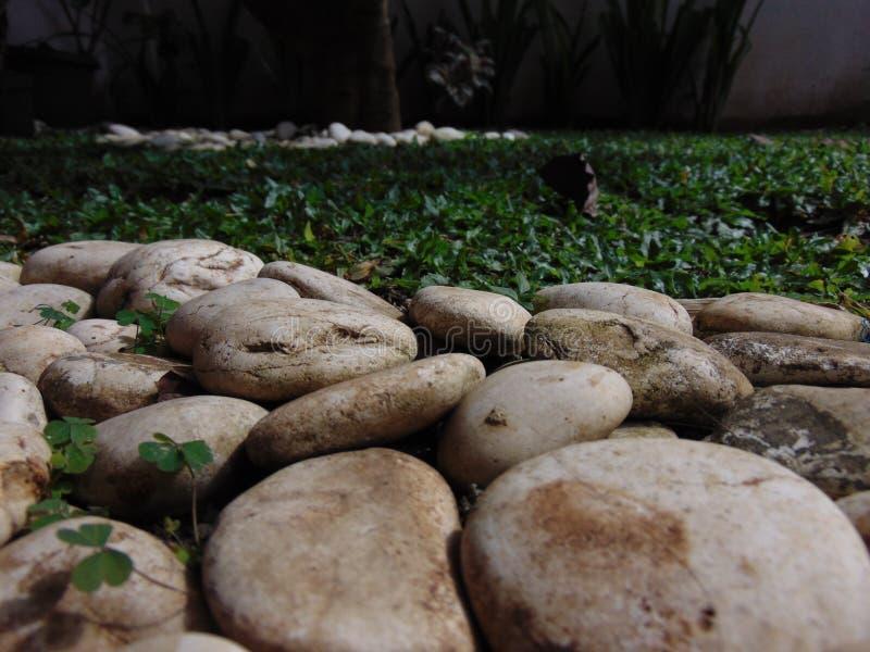 Coral e grama brancos foto de stock