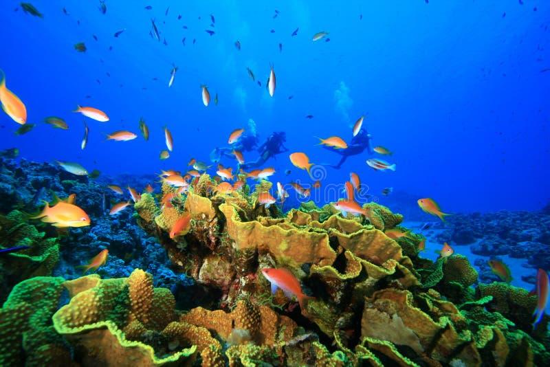 Coral e mergulhadores do repolho imagens de stock