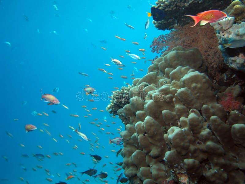 Coral e peixes imagem de stock royalty free