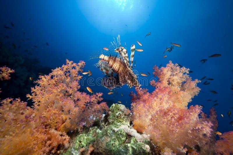 Download Coral E Peixes No Mar Vermelho. Foto de Stock - Imagem de coral, sunbeam: 16859508