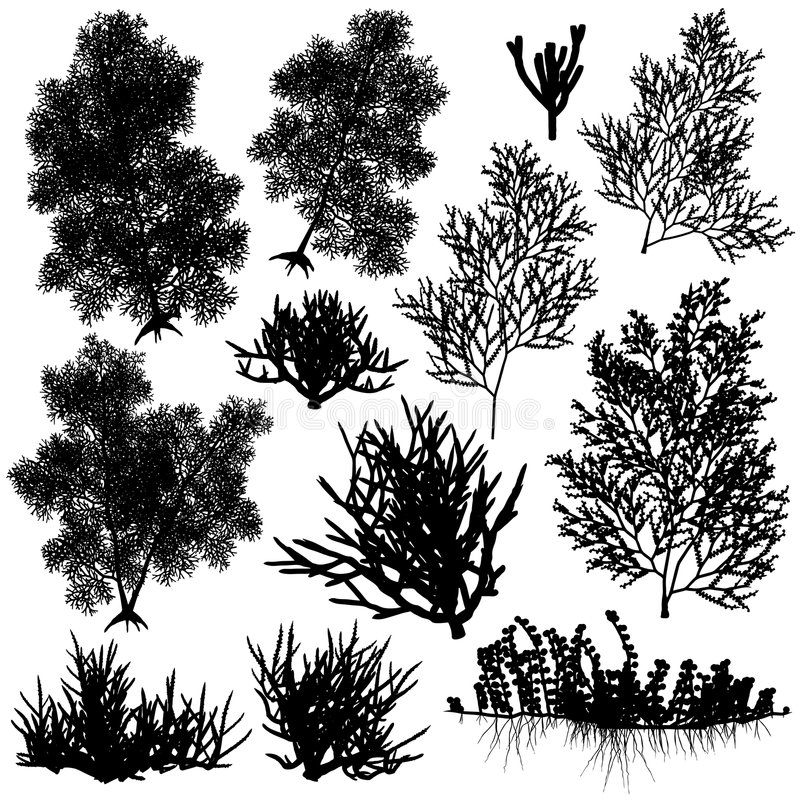 Coral elements. Set of editable vector sea coral silhouettes stock illustration