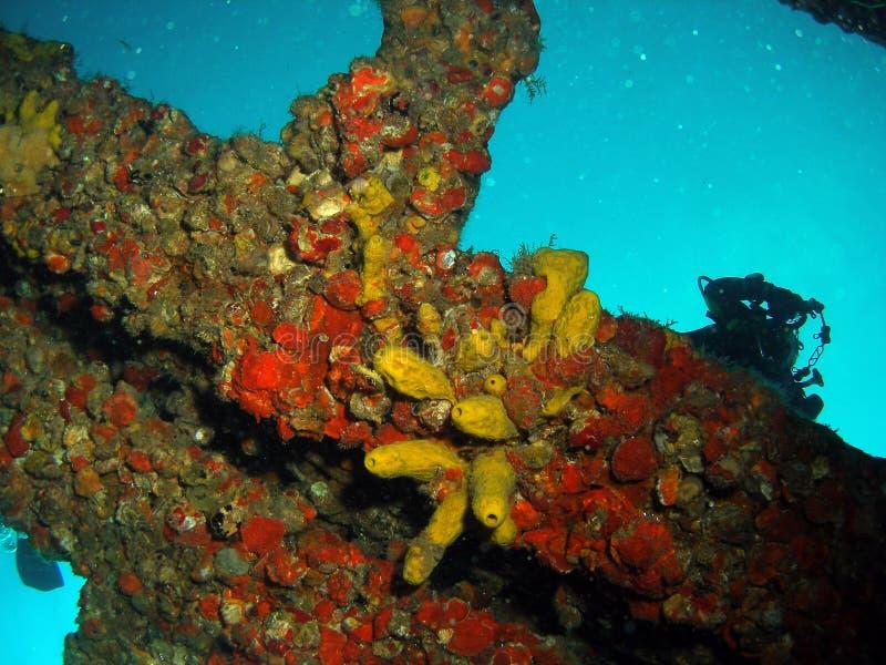 Coral em uma destruição fotos de stock royalty free