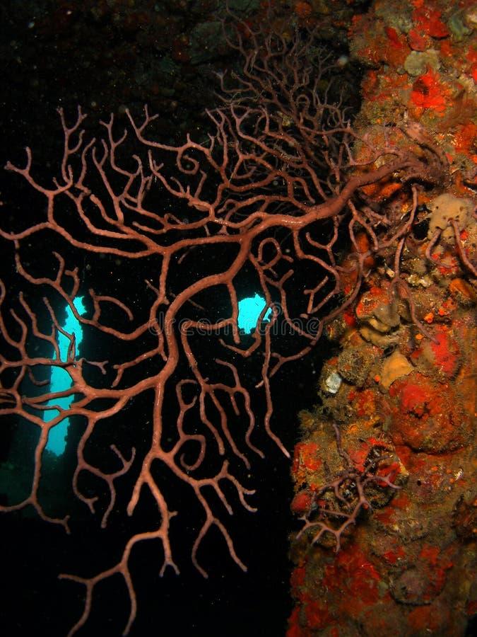 Coral em uma destruição fotos de stock