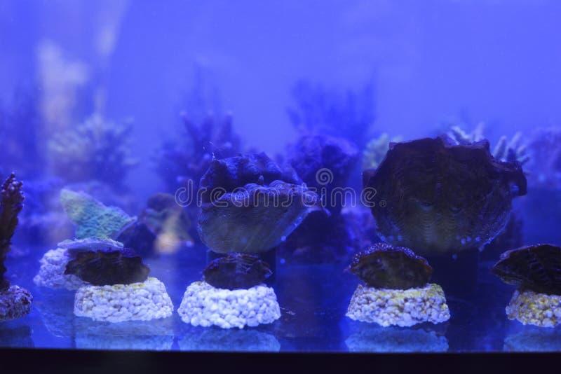Coral en acuario imágenes de archivo libres de regalías