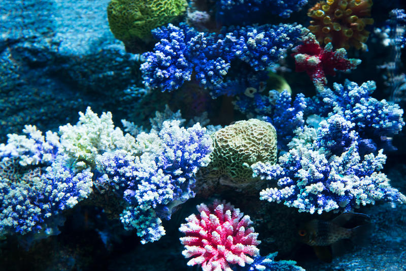 Download Coral en el fondo marino imagen de archivo. Imagen de snorkeling - 42431205
