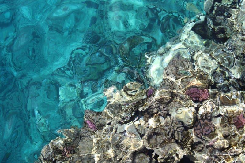 Coral en el Mar Rojo imagenes de archivo