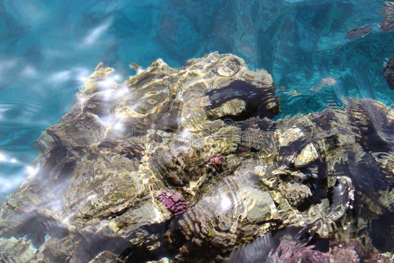 Coral en el Mar Rojo imagen de archivo libre de regalías