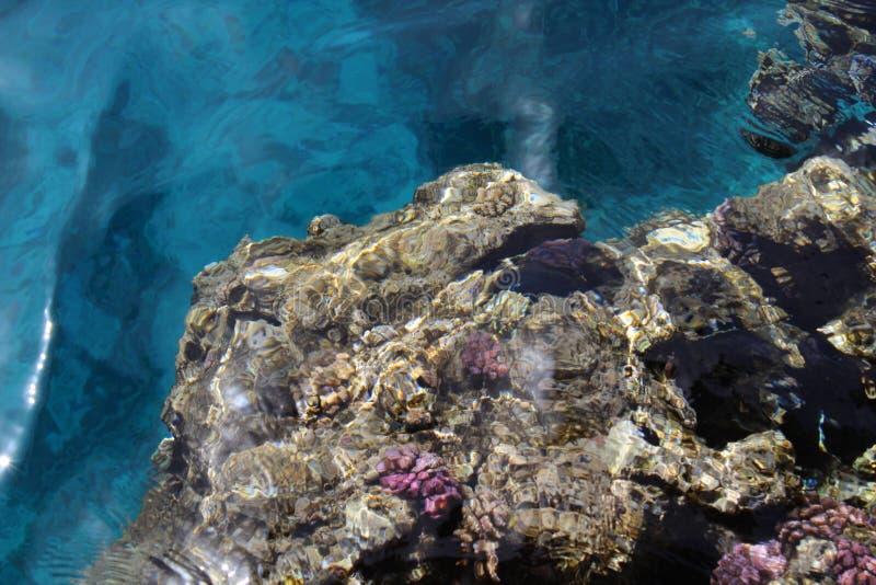 Coral en el Mar Rojo puro fotos de archivo libres de regalías