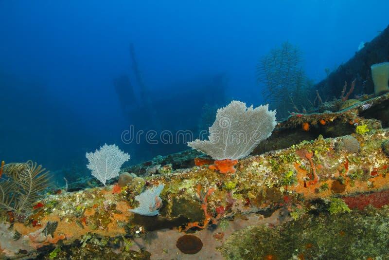 Coral Encrusted Shipwreck - Roatan, Honduras royalty-vrije stock afbeeldingen