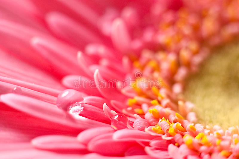 Coral exotic flower close-up stock photos
