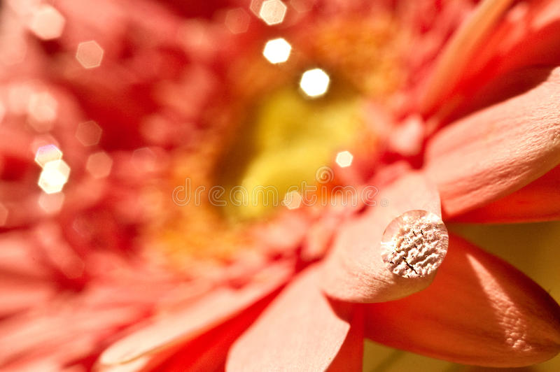 Coral exotic flower close-up stock images