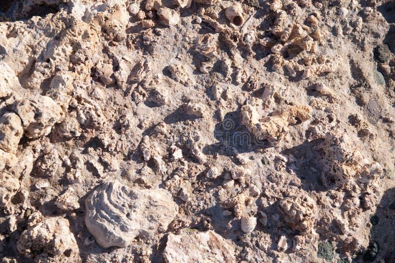 Coral fóssil e velho imagens de stock