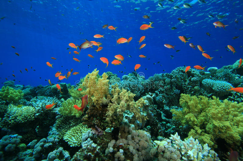 Coral And Fish Royalty Free Stock Photography