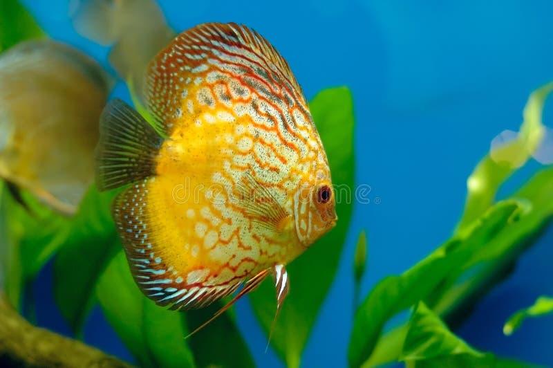 Coral fish stock photos