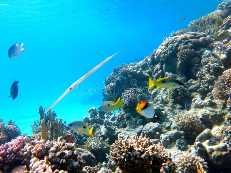 Coral Fish royaltyfria foton