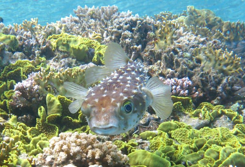 Coral Fish arkivbilder